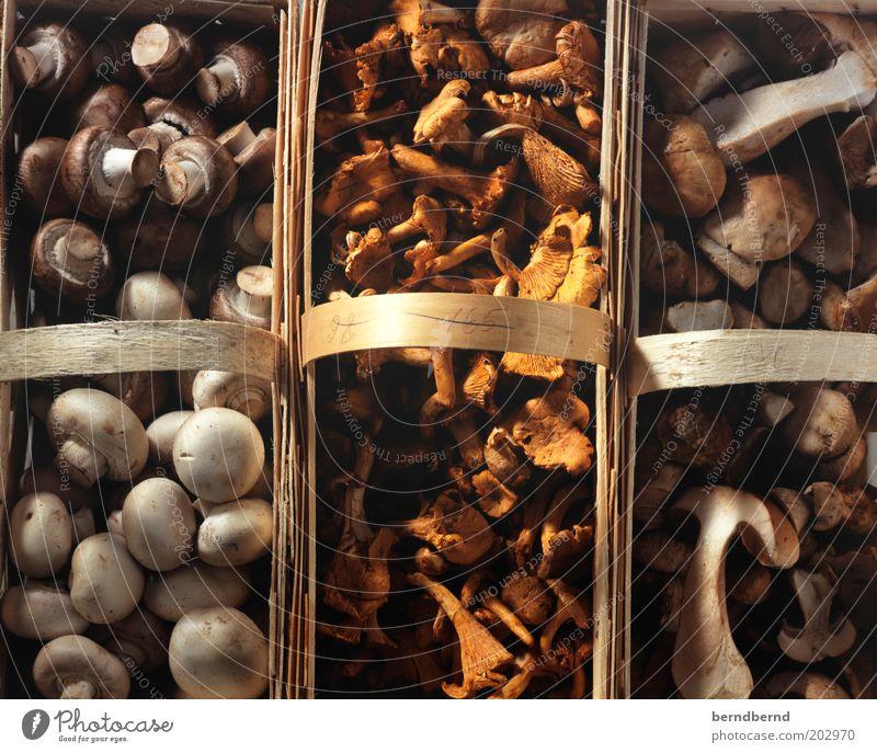 Pilze Lebensmittel Champignons Steinpilze Pfifferlinge Ernährung Bioprodukte Vegetarische Ernährung Gesundheit authentisch einfach gut lecker natürlich braun