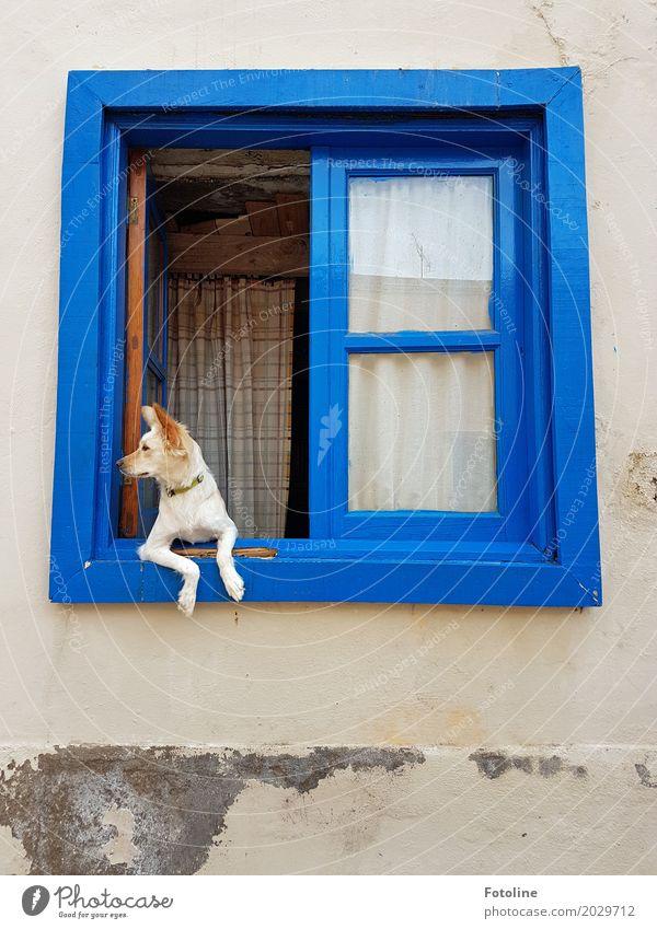 Was n da los? Haus Hütte Mauer Wand Fassade Fenster Tier Haustier Hund Tiergesicht Fell Pfote 1 hell weich blau beobachten Blick gemütlich Haushund
