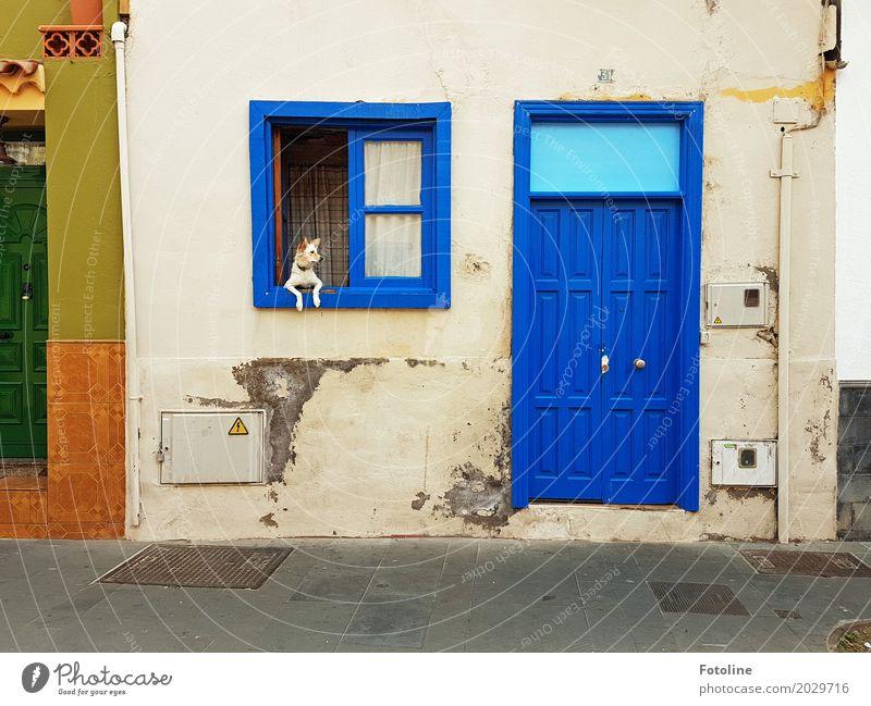 Streetart Haus Mauer Wand Fassade Fenster Tür Tier Haustier Hund Fell Pfote 1 blau grau grün orange Haushund bewachen Kontrolle Fensterscheibe Fensterrahmen