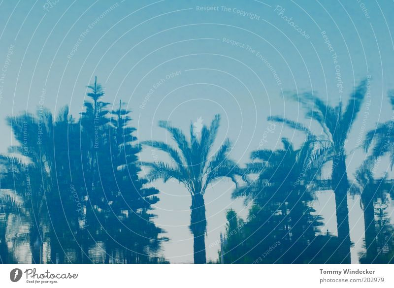 Planète bleue Ferien & Urlaub & Reisen Sommer Sommerurlaub Strand Meer Insel Landschaft Pflanze Wasser Himmel Baum Oase exotisch blau Stimmung schön Palme