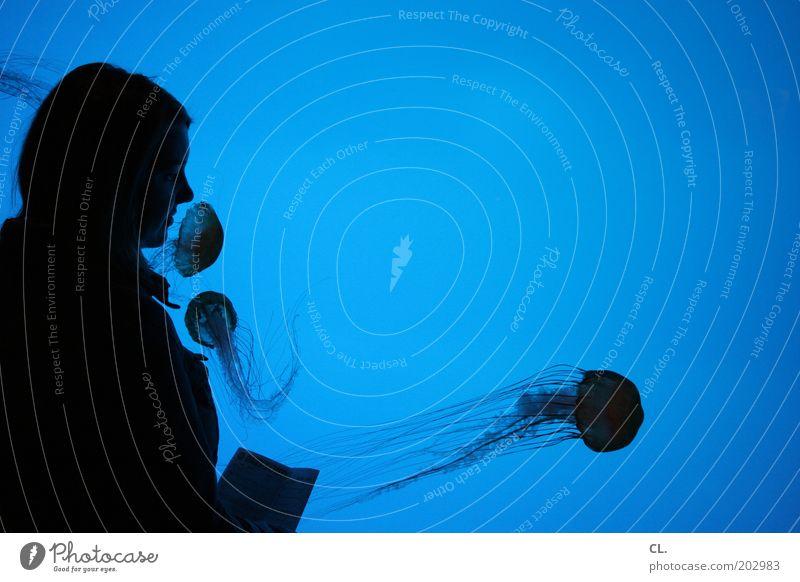 schattenqualle Mensch Frau Wasser blau schön Tier ruhig Erwachsene Leben elegant Schwimmen & Baden ästhetisch beobachten Neugier Lebewesen Zoo
