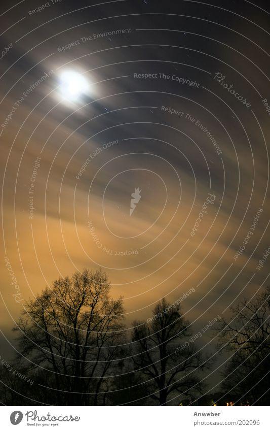 Langzeitbelichterer Nachthimmel Umwelt Natur Landschaft Himmel Wolken Stern Mond Vollmond Wetter Schönes Wetter Sturm Baum Geschwindigkeit gelb schwarz Reinheit