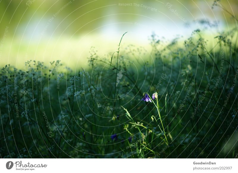 Spotlight Umwelt Natur Landschaft Pflanze Sonnenlicht Frühling Wetter Blume Wiese Wachstum Duft frei Wärme Farbfoto Außenaufnahme Menschenleer Licht