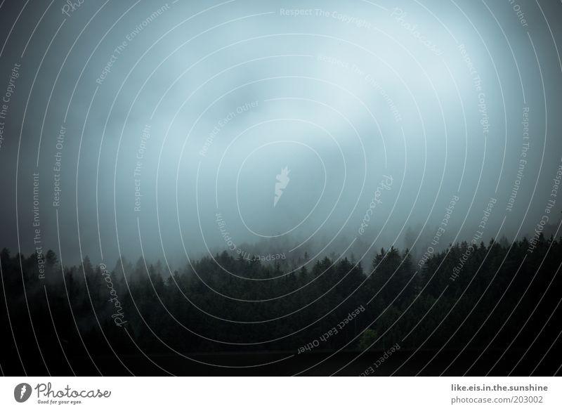 Suchbild: wo ist Harry Potter Himmel weiß Baum blau schwarz Wolken Wald kalt Regen Landschaft Nebel nass bedrohlich Alpen Hügel gruselig