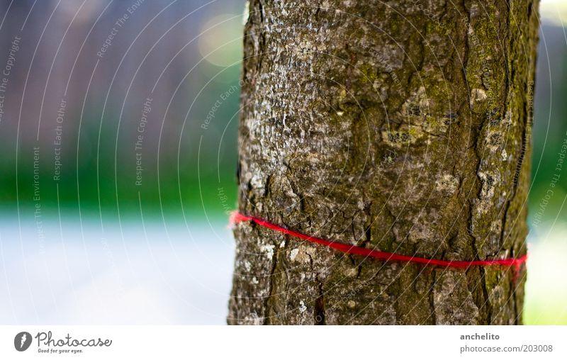 Das rote Band Natur Baum grün Pflanze rot ruhig Holz braun Umwelt Schnur Baumstamm harmonisch Baumrinde Verbundenheit Befestigung