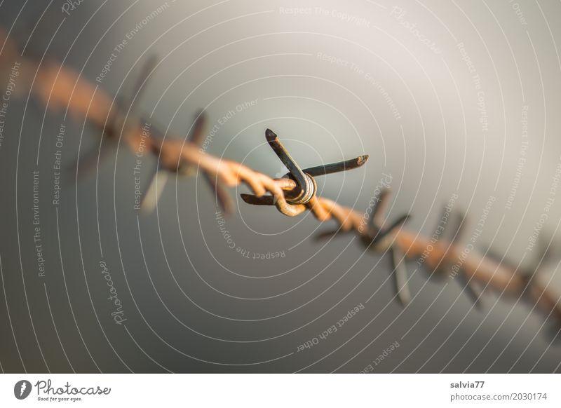Risiko | Grenzüberschreitung Zeit grau braun Perspektive gefährlich Spitze bedrohlich Zaun Grenze Rost Stahl Verbote stachelig Endzeitstimmung Stacheldraht