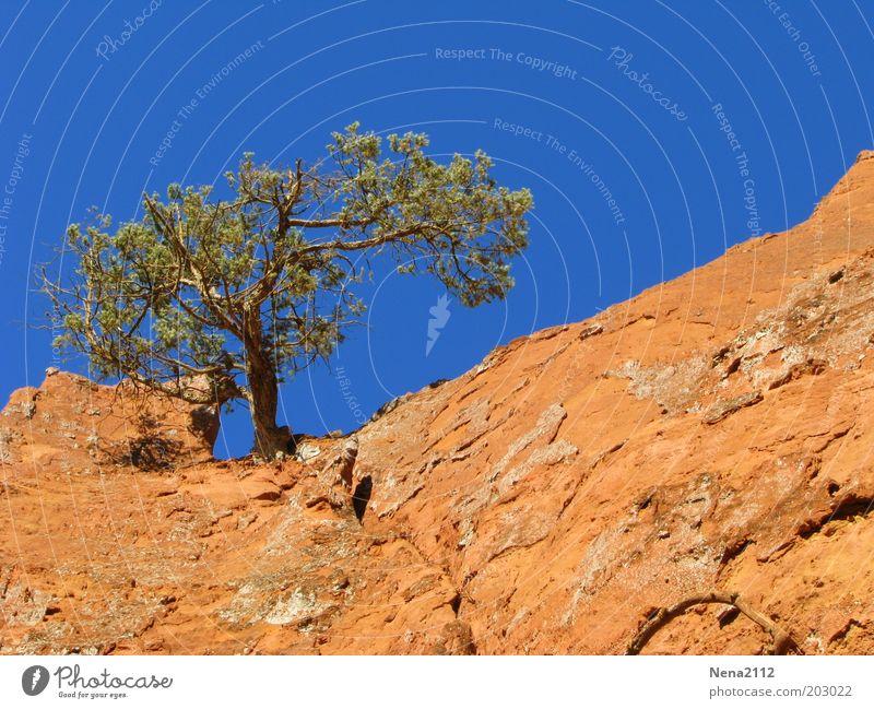 Einsam Sommer Natur Landschaft Erde Himmel Dürre Baum Felsen Stein trocken Einsamkeit Trockengebiet Pinie Rustrel gewachsen Kiefer Ockerfelsen Farbfoto