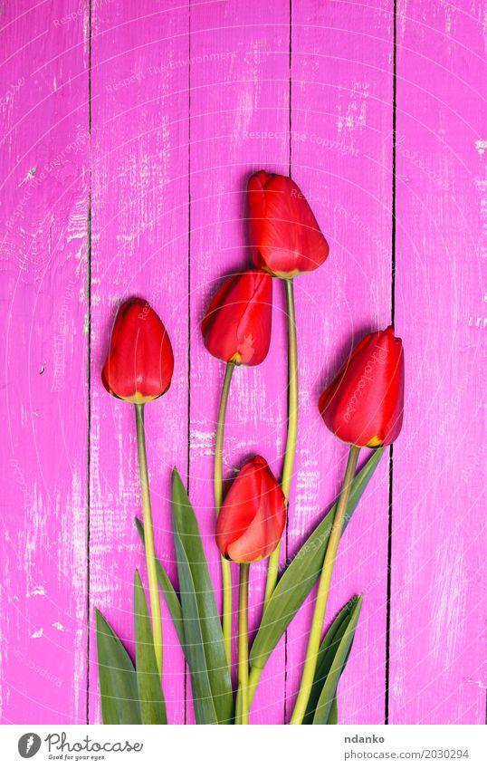 Fünf rote Tulpen auf einer rosa Holzoberfläche Pflanze schön Blume Blatt frisch Blumenstrauß Blütenknospen Blütenblatt