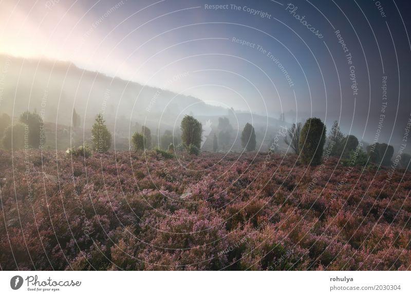 nebligen Morgen über Hügel mit Wildblumen und Wacholder Himmel Natur Pflanze Sommer Landschaft Blume Blüte Wiese Deutschland rosa Nebel Aussicht Jahreszeiten