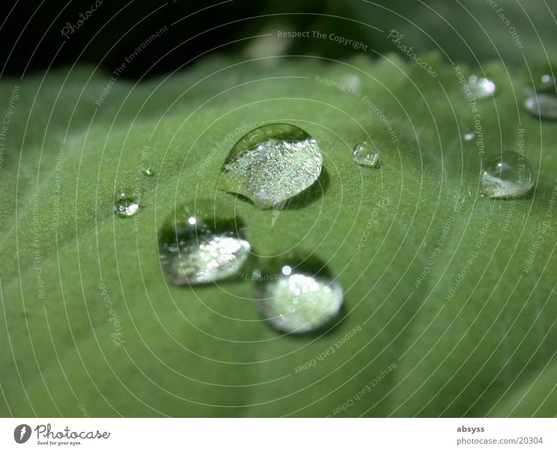 Naturtränen Wasser grün Pflanze Blatt Wassertropfen