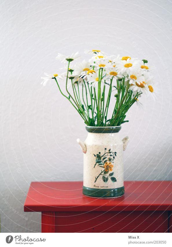 selbstgepflückt Blume rot Blüte Tisch Dekoration & Verzierung Blühend Duft Blumenstrauß Vase Margerite