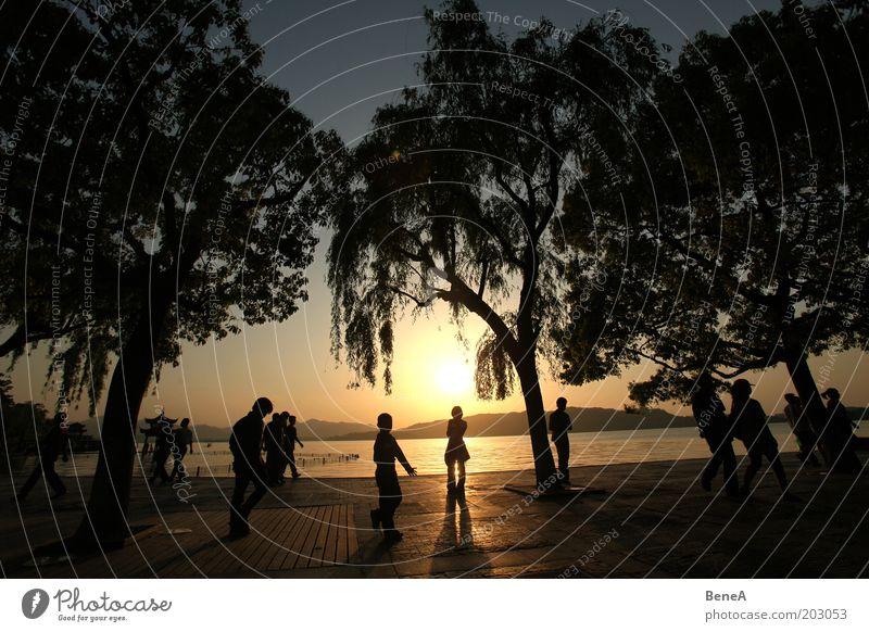 Flanieren Mensch schön Baum Ferien & Urlaub & Reisen Pflanze Sonne Sommer Freude ruhig Erholung See Menschengruppe Park gehen Freizeit & Hobby Ausflug