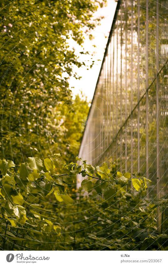 Windschutz Natur Frühling Baum Blatt Birke Garten Gebäude Architektur Gewächshaus Fassade Fenster groß grün Farbfoto Außenaufnahme Menschenleer Tag