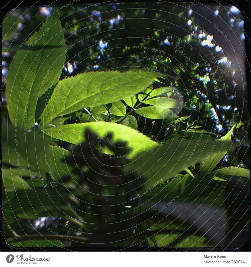 Mitteleuropäisches Walddickicht Natur grün Baum Pflanze Blatt Ferne Wald dunkel Landschaft Umwelt hell Wachstum Sträucher Schutz geheimnisvoll Idylle