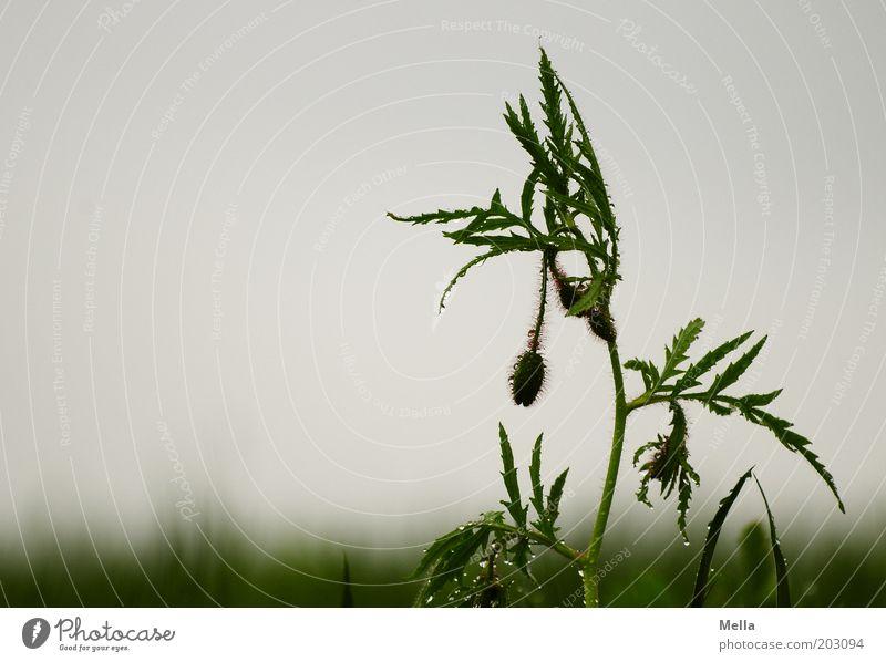 Kopf hoch! Natur Himmel Pflanze Sommer Wiese Gefühle Frühling grau Traurigkeit Regen Landschaft Stimmung Feld Umwelt Wassertropfen Trauer
