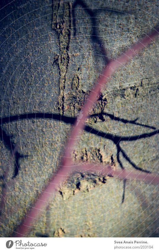 fein. Natur blau Baum Pflanze Umwelt Traurigkeit braun rosa natürlich elegant Trauer Ast Zweig Baumrinde Licht