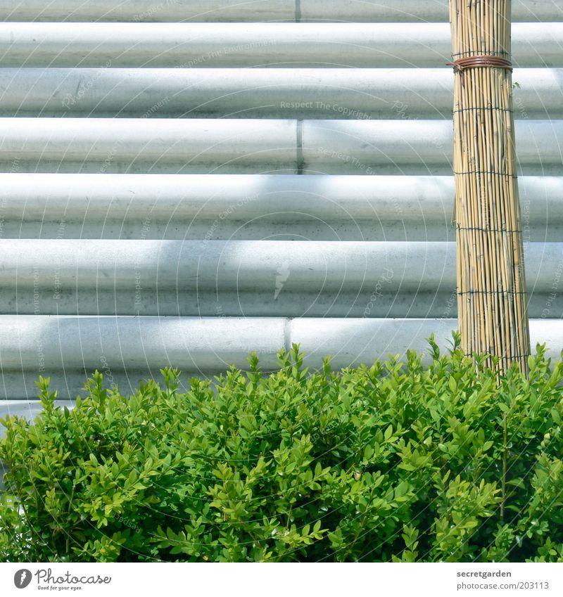 die strukturalisierung der vertikalisation. Natur weiß grün Pflanze ruhig Frühling braun Beton frisch Treppe Ordnung Sträucher Sauberkeit einzigartig Material