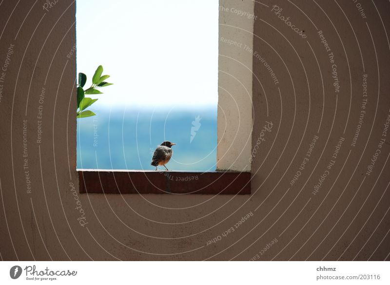 Weite Welt Himmel Meer Pflanze Blatt Tier Ferne Wand Fenster Mauer Landschaft Vogel warten Horizont sitzen Hoffnung