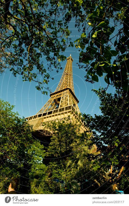 Täglich grüßt der Eiffelturm Baum Park Spitze Paris Frankreich aufwärts Wahrzeichen Konstruktion Strebe Sehenswürdigkeit Tour d'Eiffel Stahlträger Turmspitze Verstrebung Stahlkonstruktion Hochbau