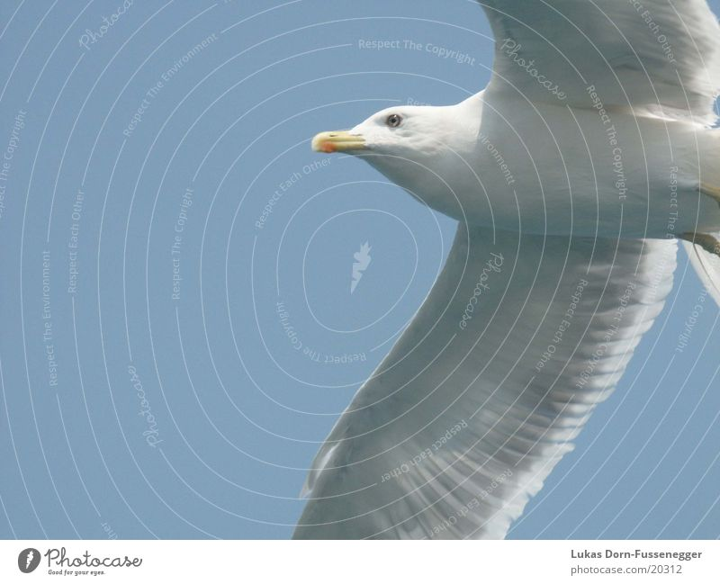 Möve Natur Meer Vogel