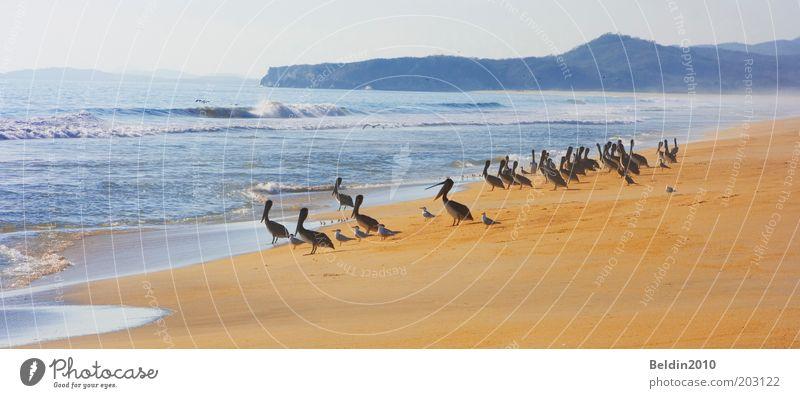 Beachboys Natur Wasser Himmel Sonne Meer Sommer Strand ruhig Tier Freiheit Wärme Sand Luft Vogel Wellen Küste