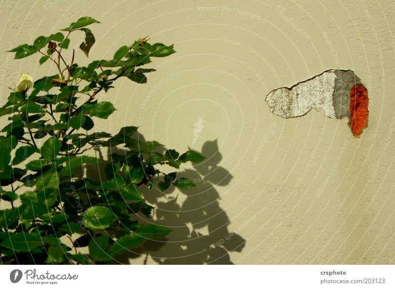 Kleiner Piepmatz der die Blumen giesst Pflanze Sträucher Mauer Wand Stein gelb Penis urinieren Farbfoto Außenaufnahme Menschenleer Textfreiraum rechts Tag Licht