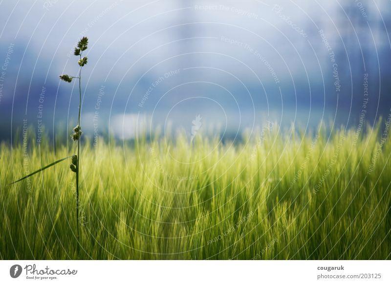 Am Feldrand Natur Himmel Pflanze Sommer ruhig Gras Frühling Landschaft Stimmung Umwelt Horizont Hoffnung ästhetisch Schönes Wetter Morgen