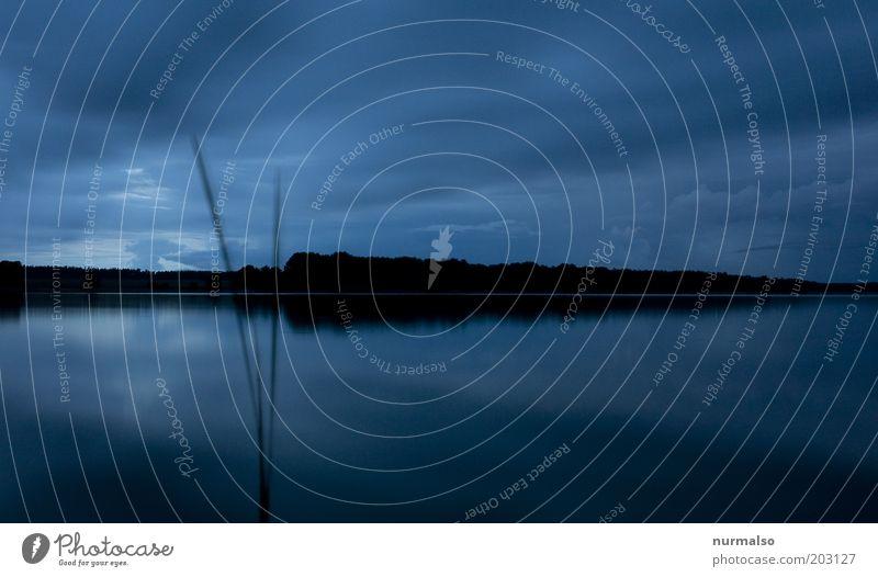 Stille am See Himmel blau Sommer ruhig Ferne Wald Gefühle Perspektive ästhetisch Fluss Klima wild Unendlichkeit Dorf Seeufer Schönes Wetter