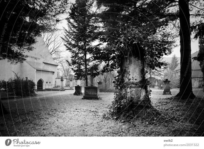 Letzte Ruhe Umwelt Natur Schönes Wetter Pflanze Baum Gras Sträucher Wildpflanze Efeu Friedhof Kirche Wachstum Glaube demütig Traurigkeit Sorge Trauer Tod