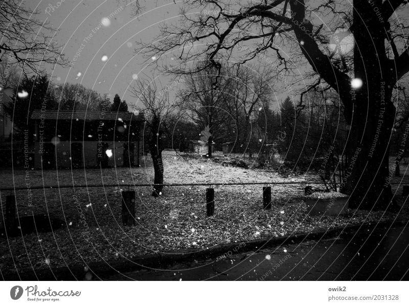 Wann wirds mal wieder richtig Winter? Umwelt Natur Landschaft Pflanze Horizont Klima schlechtes Wetter Schnee Schneefall Baum Gras Ast Wiese Dorf Haus dunkel