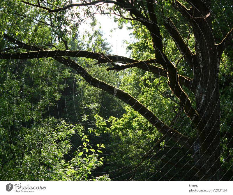 Sommer am Rande der großen Stadt Natur alt Baum Sonne grün Pflanze ruhig Wald Umwelt Wachstum Sträucher Ast geheimnisvoll Urwald durcheinander Lichteinfall