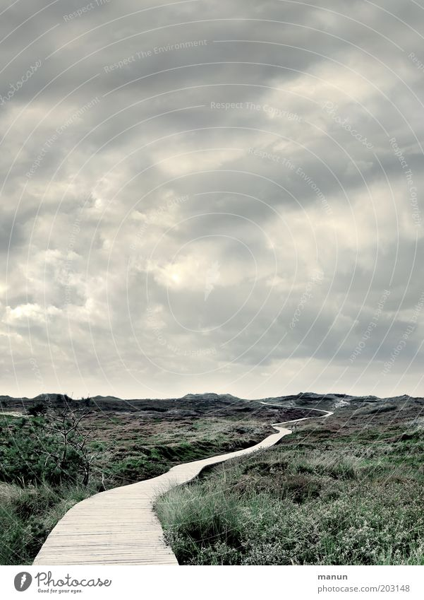 Komm, wir geh'n nach Panama! Freiheit Natur Landschaft Wolken Wetter Wind Gras Sträucher Moos Wildpflanze Nordsee Insel Amrum Düne Dünengras Steg kalt ruhig
