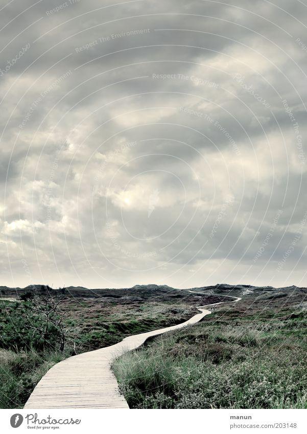 Komm, wir geh'n nach Panama! Natur ruhig Wolken Einsamkeit Ferne kalt Gras Freiheit Wege & Pfade Landschaft Wind Wetter Horizont Perspektive Zukunft Insel