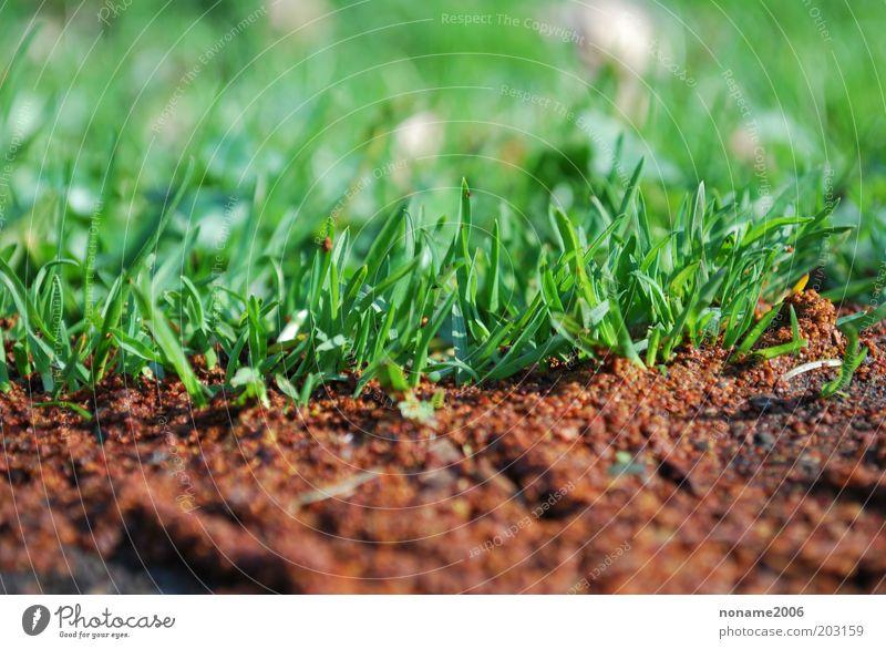 Grünes Gras auf der Parkallee Umwelt Natur Pflanze Urelemente Erde Frühling Sommer Schönes Wetter Gefühle Stimmung Farbfoto mehrfarbig Außenaufnahme Nahaufnahme