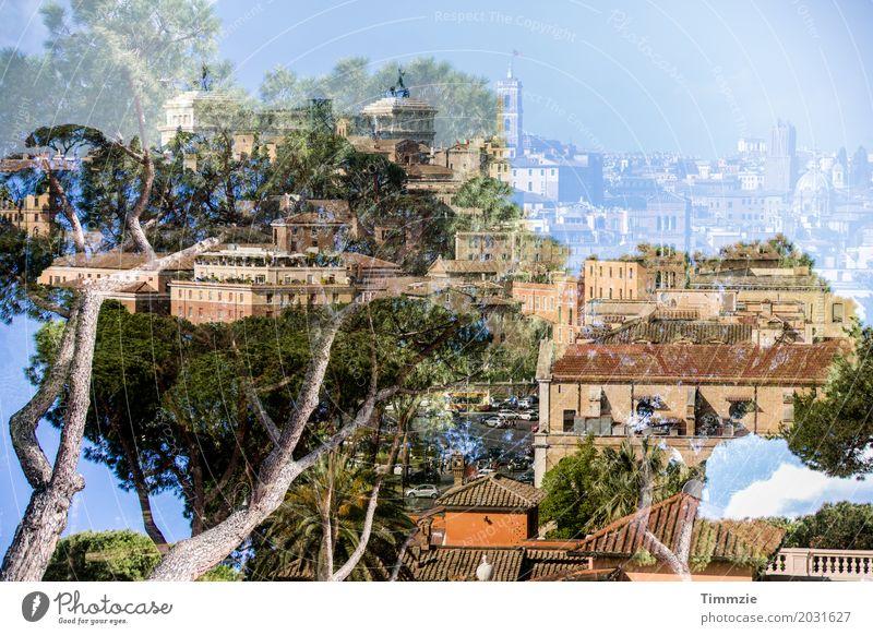 Rom Baum Italien Hauptstadt Haus Park Bauwerk Gebäude Architektur Zufriedenheit Natur Ferien & Urlaub & Reisen Umwelt Farbfoto Außenaufnahme Experiment abstrakt