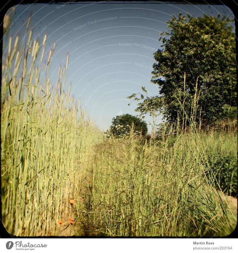 Sommertag Natur Landschaft Wolkenloser Himmel Baum Wiese Feld heiß trocken Wege & Pfade Kamerawurf Wärme Ferien & Urlaub & Reisen Farbfoto Experiment