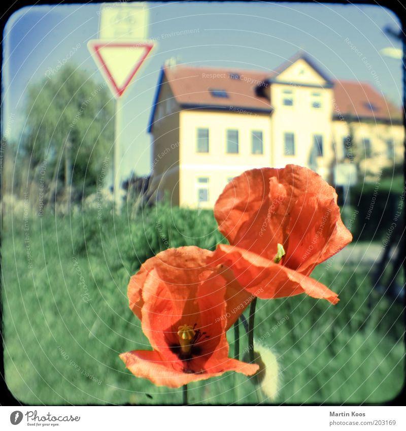 straßenrand Pflanze Blume Wildpflanze Haus rot Stimmung Wunsch Zusammenhalt Mohnblüte Klatschmohn Vorfahrt Fahrradweg Schilder & Markierungen Verkehrszeichen