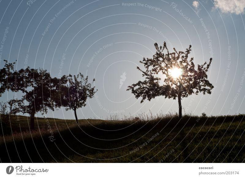 Sonnenbaum Natur Landschaft Pflanze Himmel Wolken Sonnenlicht Sommer Schönes Wetter Baum Gras Wiese Hügel natürlich Wärme blau Fernweh Farbfoto Außenaufnahme