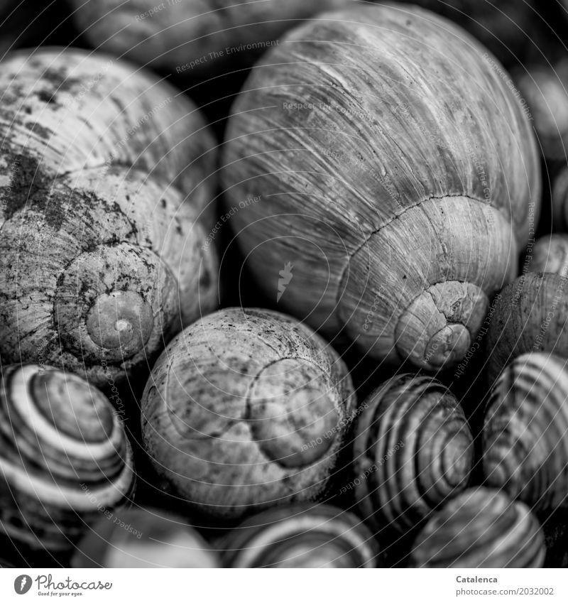 Schneckentreff Natur Schneckenhaus Tiergruppe alt ästhetisch grau schwarz weiß Gefühle Tod Ende Design Endzeitstimmung Umwelt Mehrere Schneckenhäuser