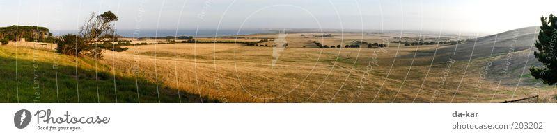 Phillip Island Natur Landschaft Pflanze Wiese Hügel Küste Insel Australien Menschenleer Fernweh Einsamkeit Freiheit ruhig Farbfoto Außenaufnahme Morgen