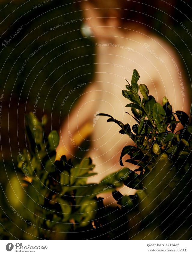 Einsparpotential Mensch maskulin Kleinkind Kindheit Bauch 1 1-3 Jahre Sträucher beobachten Spielen grün Wachsamkeit Garten Farbfoto Außenaufnahme Nahaufnahme