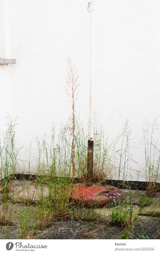 Balkon Wilderness Natur weiß grün Pflanze Sommer Haus Wand Gras Frühling Garten Mauer Fassade Wachstum Terrasse