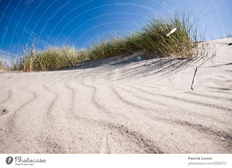 wie das Land, ... Umwelt Natur Pflanze Sand Luft Himmel Wolkenloser Himmel Sonne Sommer Wetter Schönes Wetter Küste Strand Meer Insel Spiekeroog strandhafer