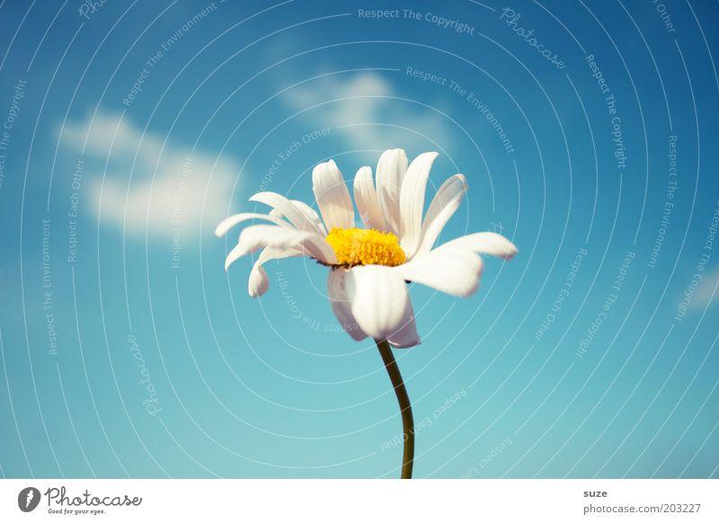 Blumenstockbild mit Wind Himmel Natur blau Pflanze Blume Sommer Freude Umwelt Gefühle Blüte Glück Frühling Luft Wind frei frisch