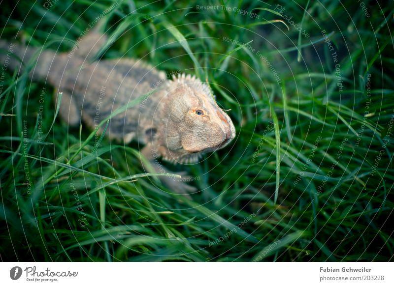 Jurassic Garten II Natur grün Sommer Tier Wiese Umwelt Gras klein frei authentisch außergewöhnlich Tiergesicht Neugier beobachten drehen