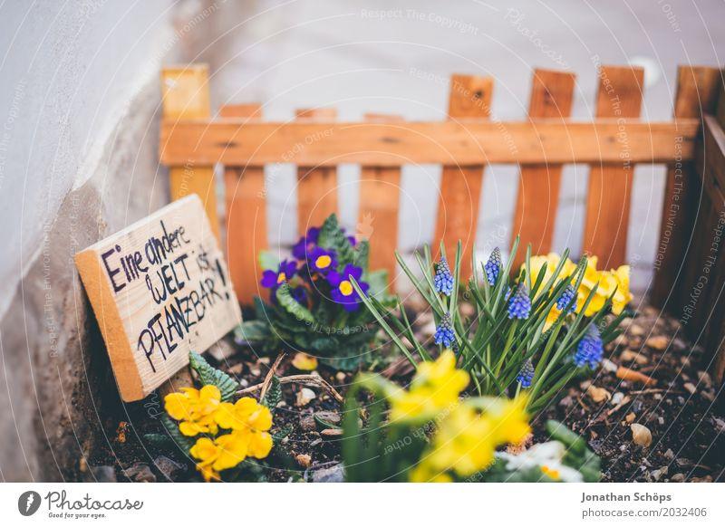 Eine andere Welt ist pflanzbar Pflanze Sommer Blume Straße Blüte Frühling Liebe Wiese Garten Erde Wachstum Blühend Bürgersteig Zaun Schrebergarten Umweltschutz