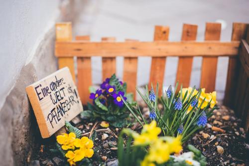 Eine andere Welt ist pflanzbar Sommer Garten Gartenarbeit Pflanze Erde Frühling Blume Blüte Wiese Straße Liebe Wachstum Fortschritt Engagement Holzzaun