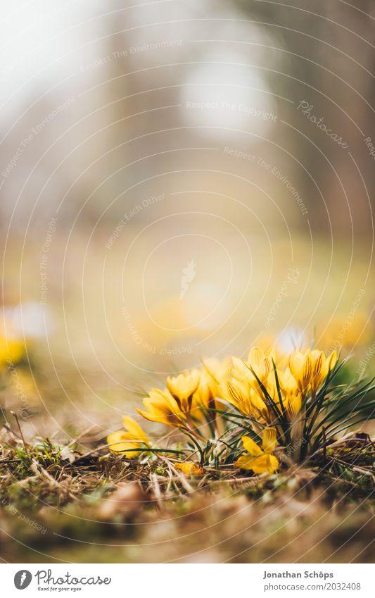 Frühlingswiese VII Erholung Sommer Garten Blume Blüte Wiese Wachstum klein gelb violett rosa Erfurt Klein Venedig Klein-Venedig Erfurt Thüringen krokuss