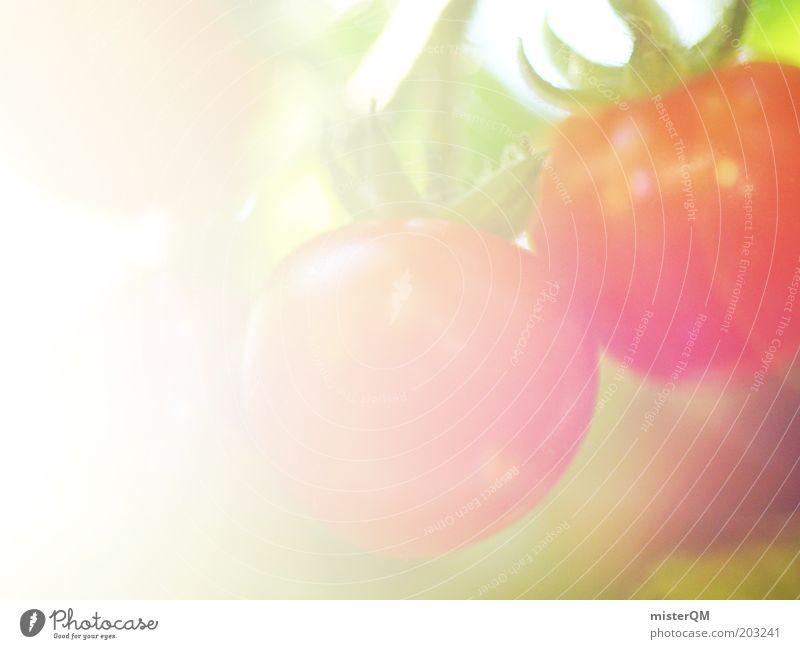 Eigenernte. Lebensmittel Ernährung Natur Bioprodukte ökologisch Gesundheit Landwirtschaft anbauen Tomate lecker Gemüse reif Reifezeit rot hell weich Duft