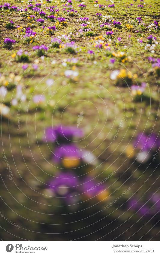 Frühlingswiese I Erholung Sommer Garten Blume Blüte Wiese Wachstum gelb violett rosa Zufriedenheit Lebensfreude Frühlingsgefühle Erfurt Klein Venedig